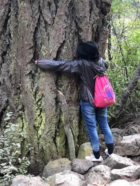 バーニーフォールズの大木